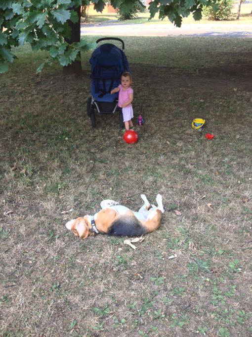 Válející se pes s Lilkou v pozadí