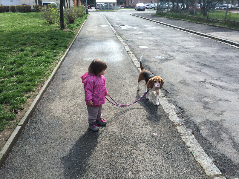 lily-anna-mam-brachu-vencim-psa